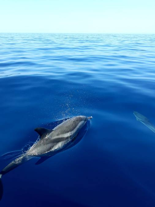 What about dolphin-watching in Taranto: https://www.joniandolphin.it/wordpress/2017/